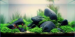 Tự tay setup bể thủy sinh – mang thiên nhiên vào không gian sống của bạn