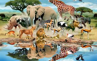 Learn English by topics: Animal